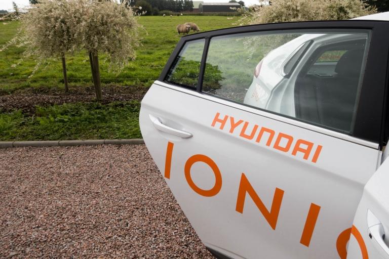 Das Wollschwein (Schaf) ist neugierig bezüglich des Hyundai IONIQ.